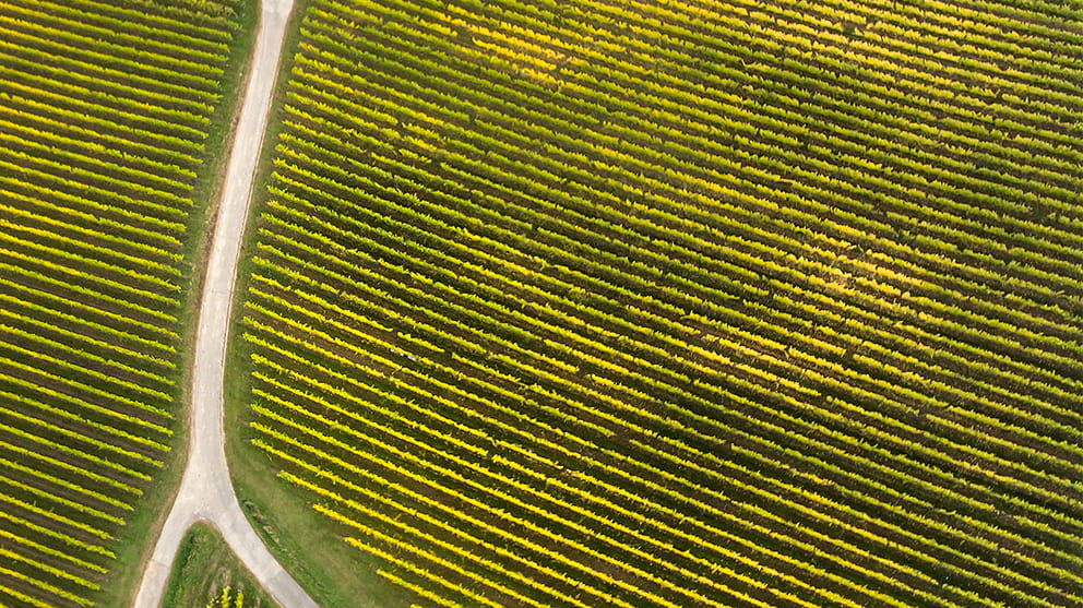 Aerial view of fields with a path cutting across
