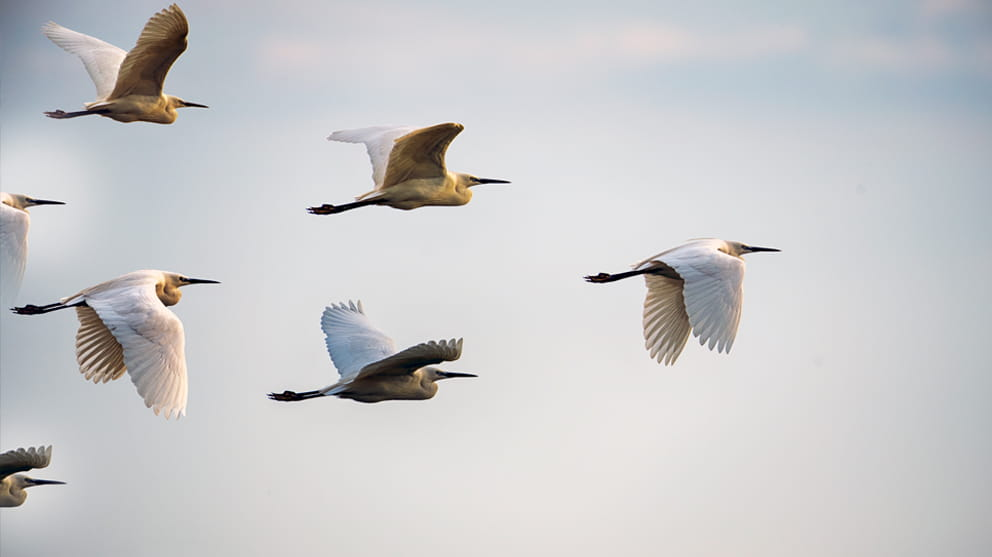 Leadership Concepts - birds flying in formation
