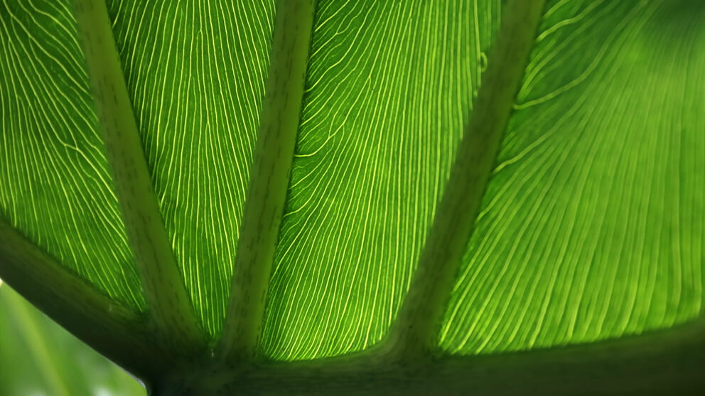 Close-up of a tropical leaf